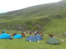 Acampando en plena naturaleza salvaje, rodeados de caballos en Mintxate